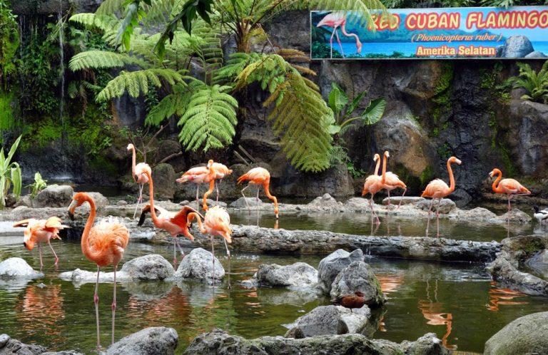 6 Kebun Binatang Terbaik Di Indonesia